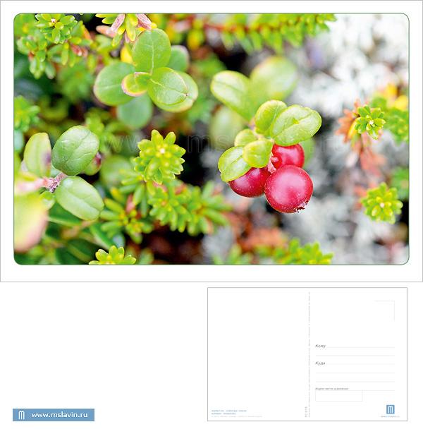 http://mslavin.ru/img/catalogimages/9800aa6dd634.jpg